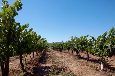 baja-wine-country.jpg