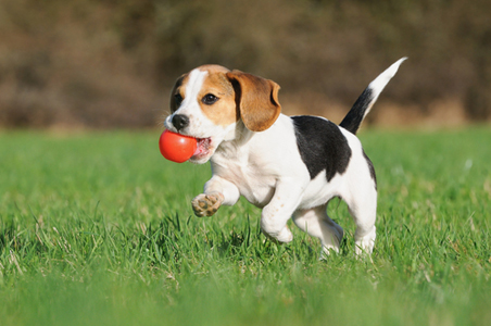 beagle-road-trip.jpg
