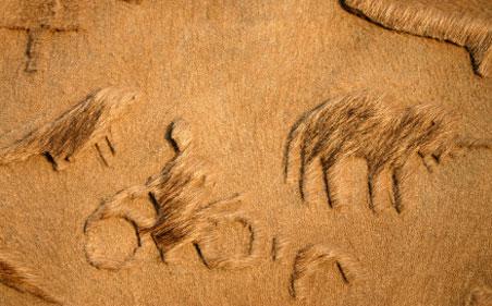 bikaner-camel-closeup.jpg