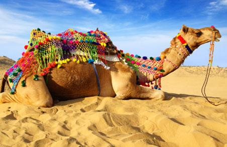 bikaner-camel-fest1.jpg