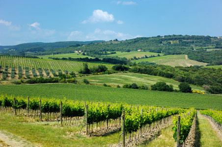 bordeaux-wine.jpg