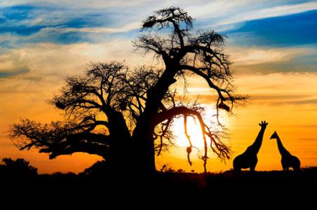 botswana-horizon.jpg