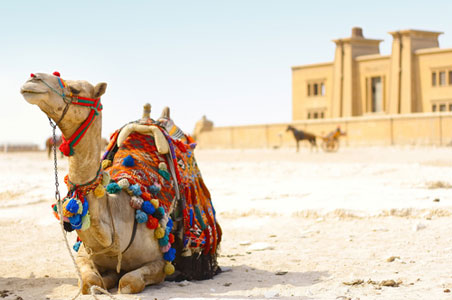 camel-drawing.jpg