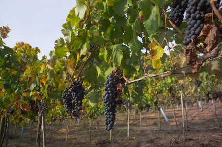 chile-wine-country.jpg