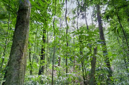 corcovado-trees.jpg