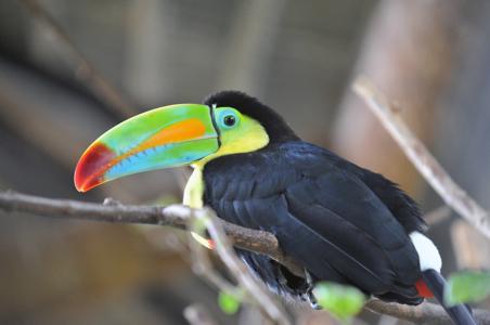 costa-rican-toucan.jpg