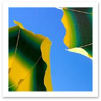 criss-flickr-beach-umbrellaF.jpg