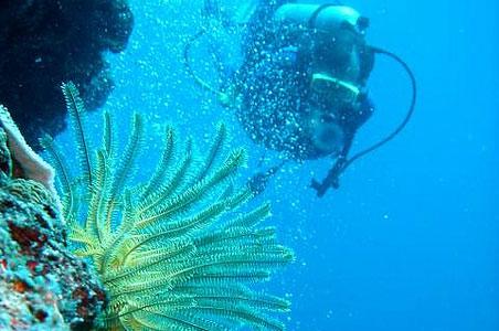 diving-tufi-papua-new-guinea.jpg