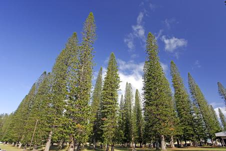 dole-park-lanai-hawaii.jpg