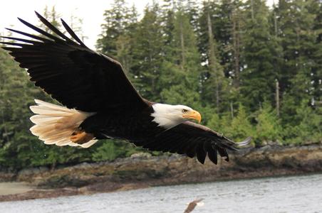eagle-midflight-story.jpg