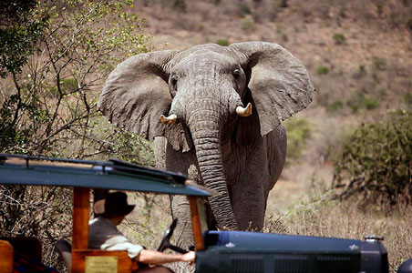 elephant-migration-cottars.jpg