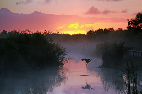 everglades-winter.jpg