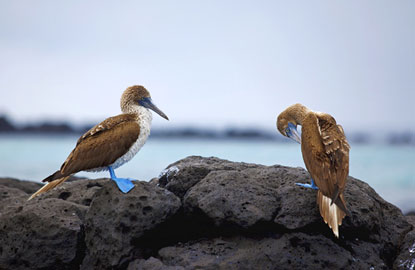 galapagos-blue-foot.jpg