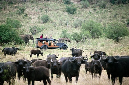 great-migration-safari.jpg