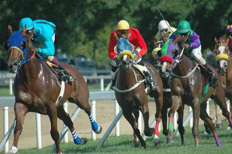 horses-barbados.jpg