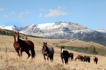 horses-glacier-park2.jpg