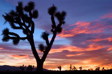 inland-empire-desert.jpg