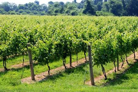 long-island-wineries.jpg