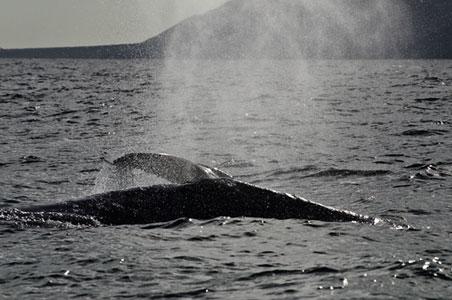 magdalena-bay-whales.jpg