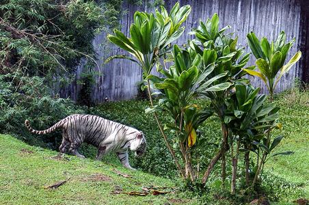 namaste-hilo-zoo.jpg