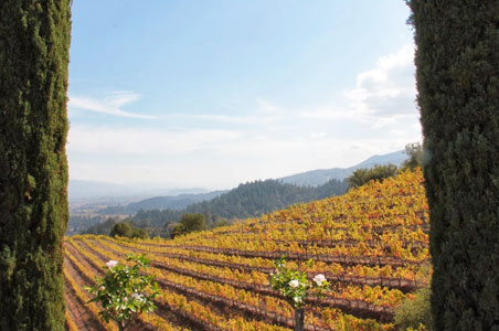 newtown-vineyard-fall-napa.jpg