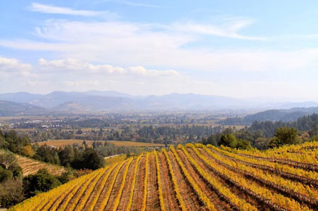 newtown-vineyard-fall-napa2.jpg