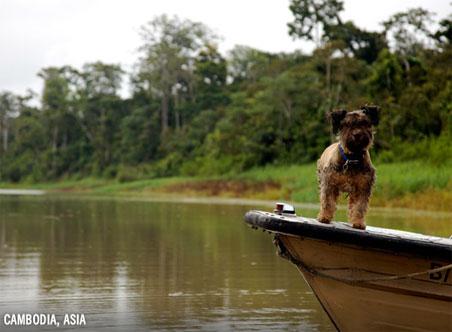 oscar-cambodia.jpg