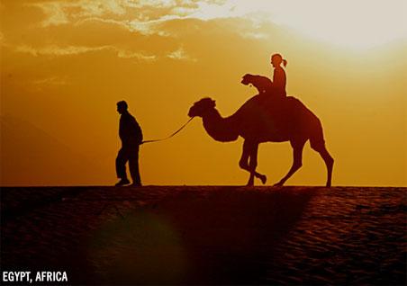oscar-egypt.jpg