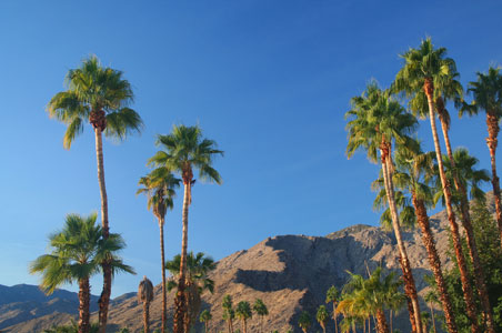 palm-springs-california-winter.jpg