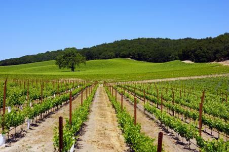 paso-robles-vineyards.jpg