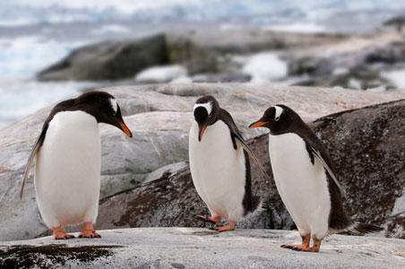 penguins-antarctica.jpg