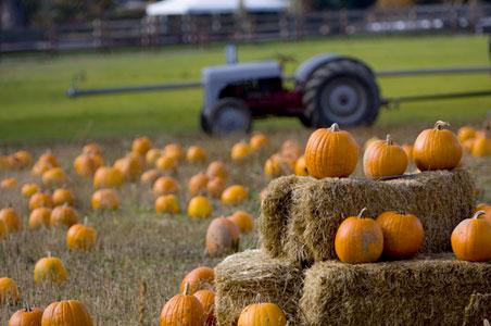 pumpkin-picking1.jpg