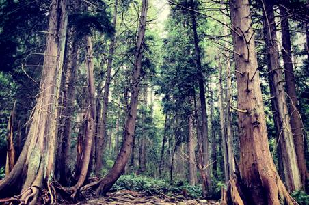 road-trip-redwoods.jpg