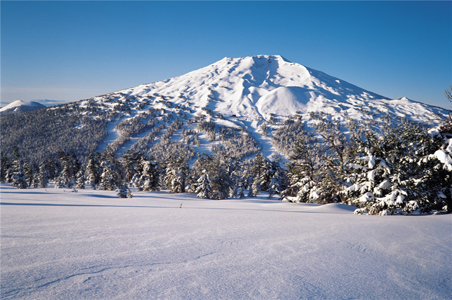 rs-mt-bachelor.jpg