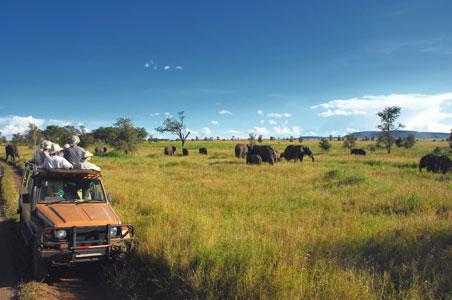 safari-operator.jpg