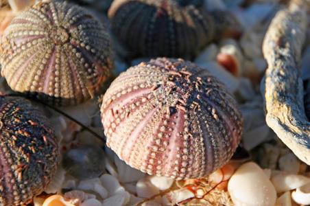sanibel-shells.jpg