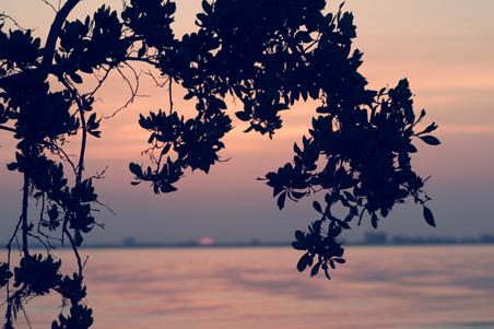 sanibel-sunrise-cruise.jpg