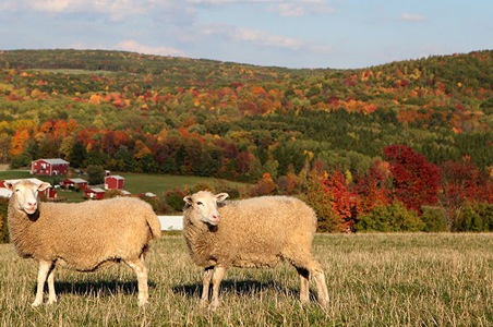 sheep-farm-sanctuary.JPG