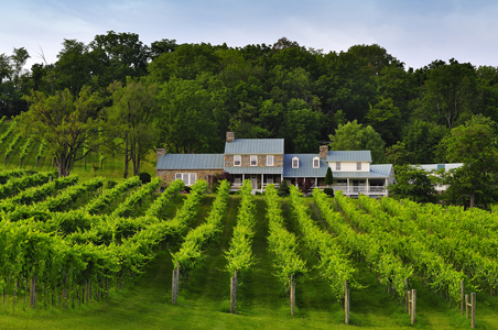 shenandoah-valley-wines.jpg
