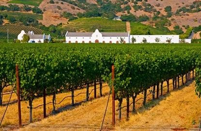 sonoma-vineyards1.jpg