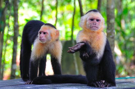 spider-monkeys-costa-rica.jpg