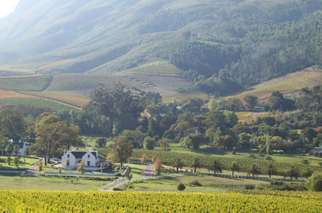 stellenbosch-south-africa-wine-country.jpg