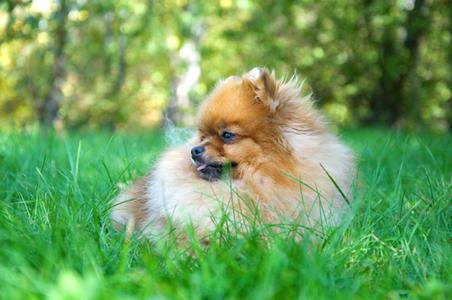 summer-dog2.jpg