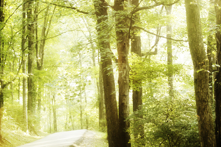 tennessee-hiking-trail.jpg