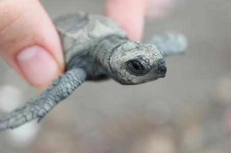 turtle-conserv.jpg