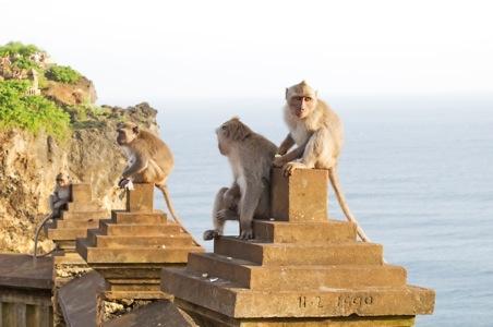 ubud_monkeys.jpg
