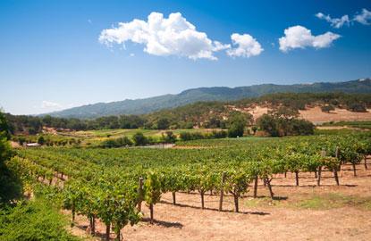 vineyarddaytime.jpg