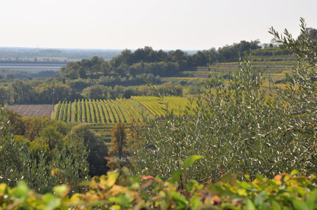 vineyards-friuli-italy.jpg