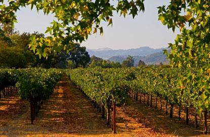vineyardsafternoon4.jpg