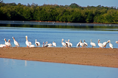 wildlife-refuge-sanibel.jpg